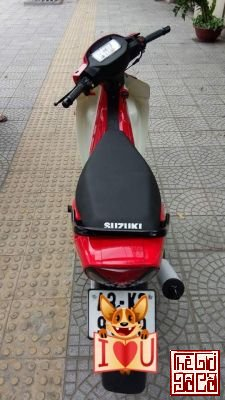 suzuki3-tgdc.jpg